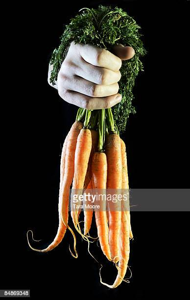 hands holding bunch of carrots
