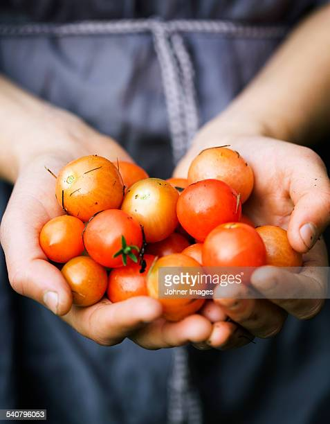 Hands holding cherry tomatoes