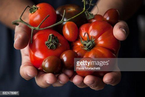 Hands holding few tomatoes varieties