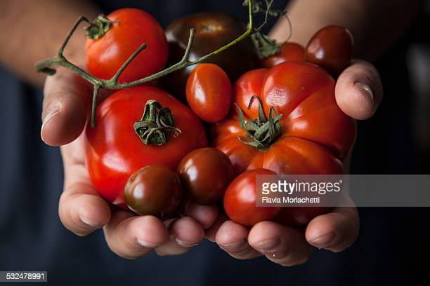 Hands holding few tomatoes varieties