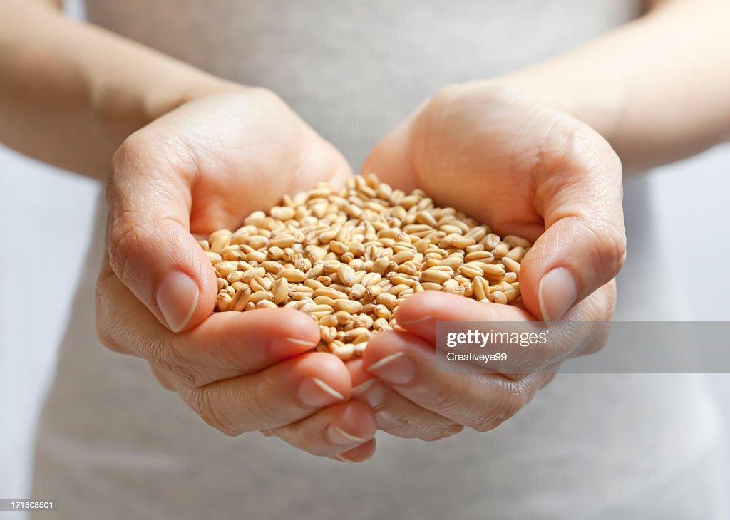 Hands holding grain : Stock Photo