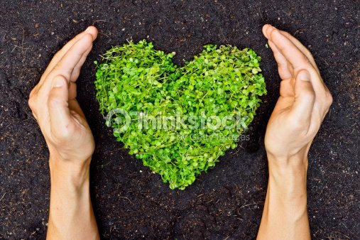 hands holding green heart shaped tree : Stock Photo