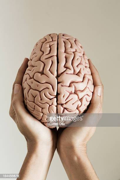 Hands holding human brain