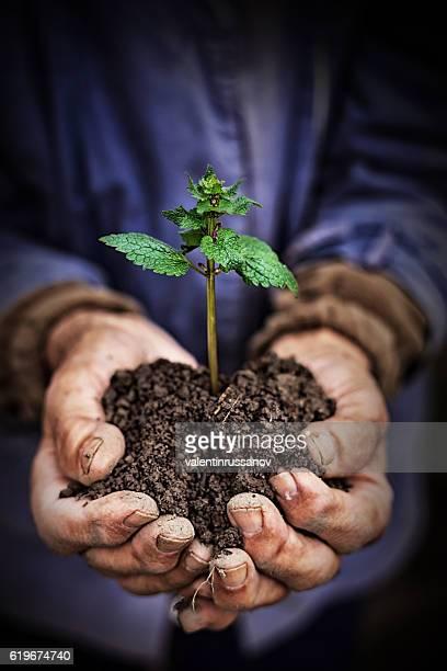 手を保持新しい成長植物暗い背景