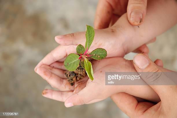 Mains tenant Plante
