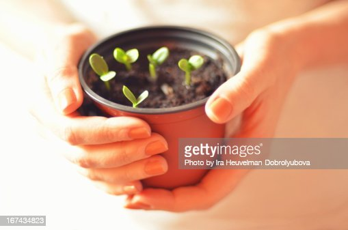 Hands holding plants : Stock Photo