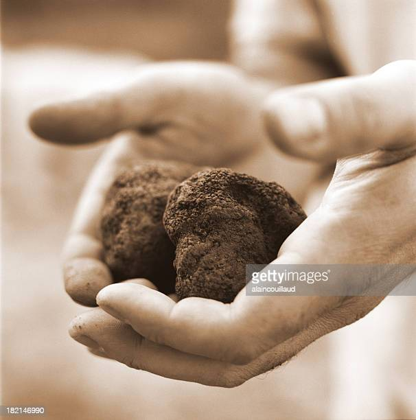 hands holding truffles