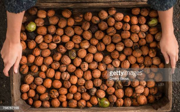 Hands holding walnuts in wooden box