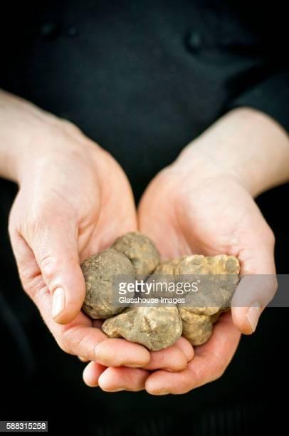 Hands Holding White Truffles