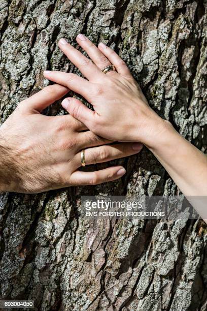 hands of a groom and a bride with wedding rings on annular finger touching together a tree bark outside on a sunny day after wedding ceremony