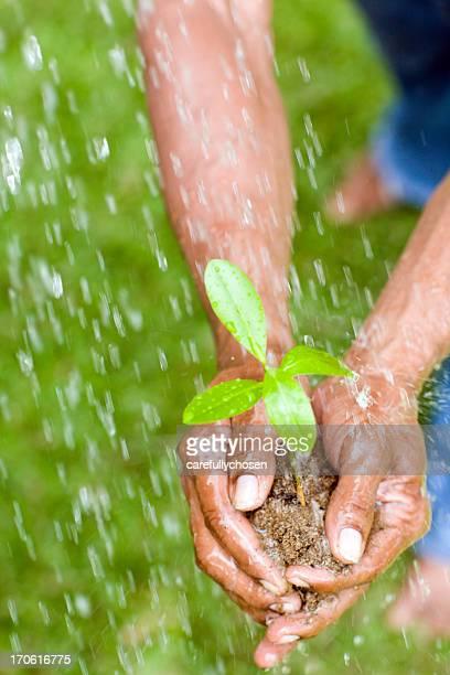 Mani di speranza di giovane Piantina di semenzaio e del suolo
