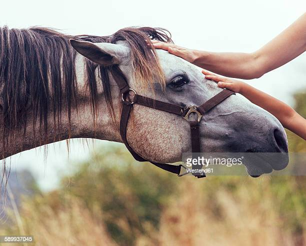 Hands of woman and little girl stroking horse