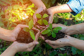 Hands People Team Work family Cupping  young Plant Nurture Environmental and reduce global warming earth.  Ecology Concept