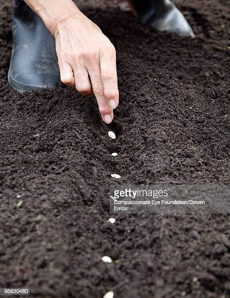 hands planting seeds in the soil