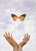 Hands releasing butterfly