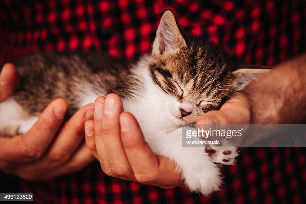 Hands safely holding a tiny sleeping fluffy kitten
