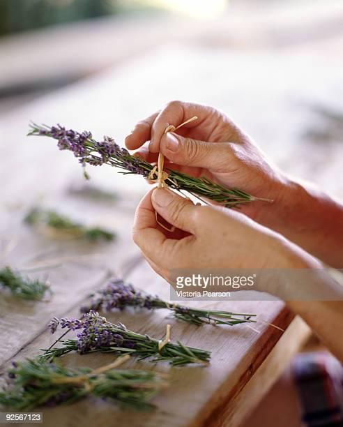 Hands tying lavender bundles