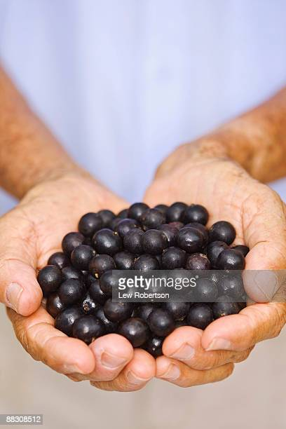 Hands with acai berries