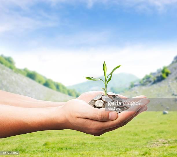 Mãos com dinheiro e planta