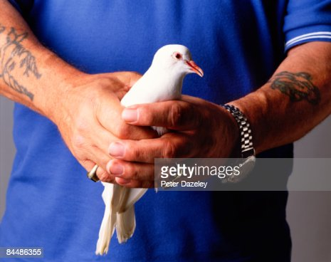 Hands with peace dove : Stock Photo