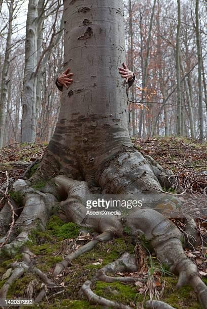 Hands wrap around trunk of hardwood tree