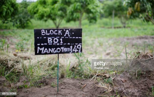 Handwritten information sign on a mango farm on May 19 2017 in Ithanka Kenya