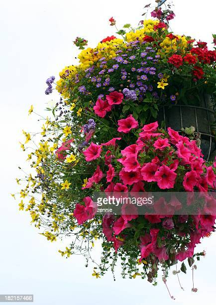 Hanging basket filled with lots of colorful flowers