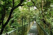 hanging bridge in the jungle