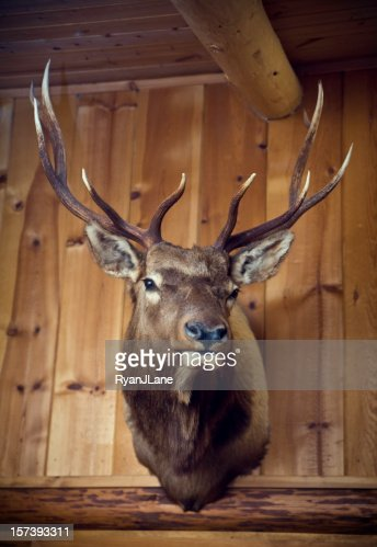Hanging Deer Head on Wood Cabin Wall