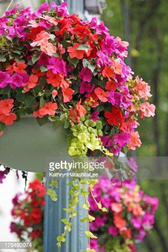 Hanging Flower Baskets Calgary : H?ngende blumenk?rbe streetlampe in victoria british