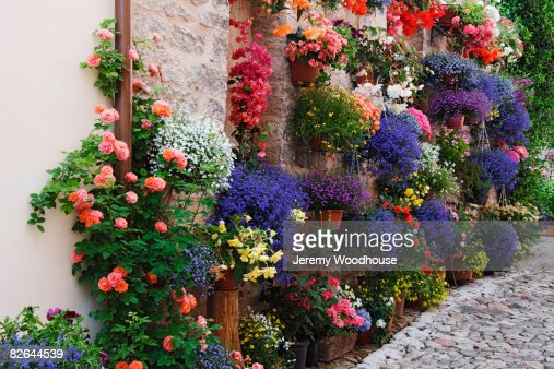 Hanging Plants and Flowers : Stock Photo