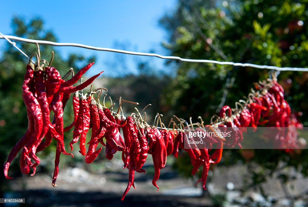 hanging red peppers to dry : Stockfoto
