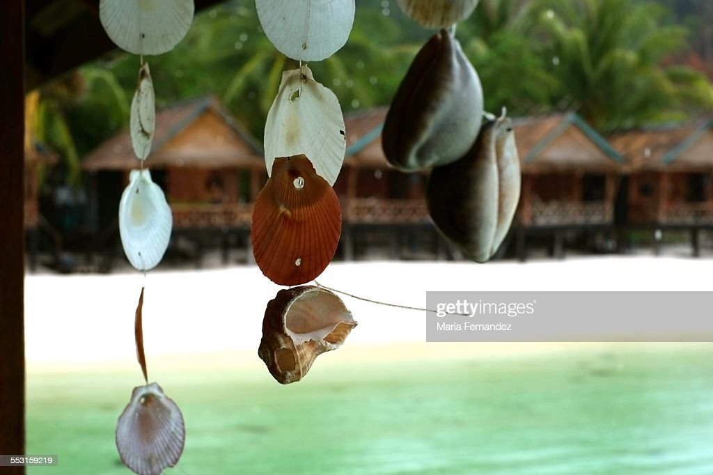 Hanging sea shells : Stock Photo