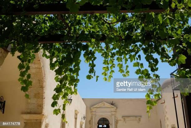Hanging vines of Gonia, Kolymvari, Crete - July 14, 2017
