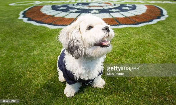 Hank the Dog who was rescued by the Milwaukee Brewers when he wandered into their spring training facility before the start of the 2014 season is...