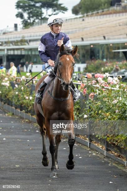 Hans Holbein ridden by Beau Mertens returns after winning the Flt Lt Peter Armytage Handicap at Flemington Racecourse on April 25 2017 in Flemington...