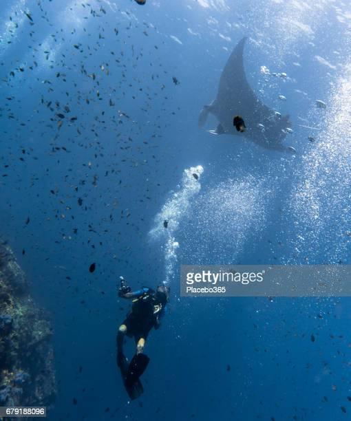 Happiness in Nature: Man enjoying nature scuba diving with an Endangered Species Pelagic Oceanic Manta Ray (Manta birostris). The location is Hin Muang Archipelago, Krabi, Andaman Sea, Thailand.