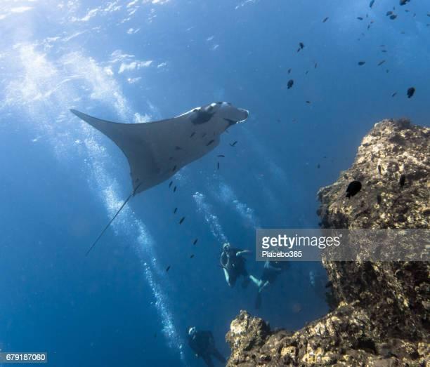 Happiness in Nature: People enjoying nature scuba diving with an Endangered Species Pelagic Oceanic Manta Ray (Manta birostris). The location is Hin Muang Archipelago, Krabi, Andaman Sea, Thailand.