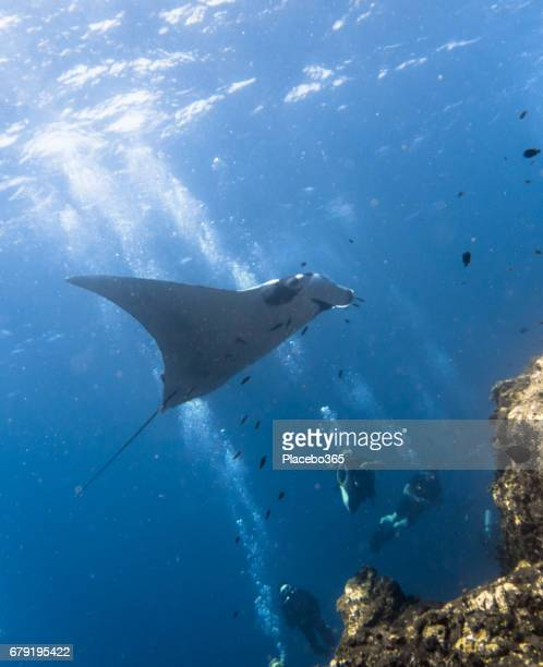 Happiness in Nature: People enjoying nature scuba diving with an Endangered Species Pelagic Oceanic Manta Ray (Manta birostris). The location is Hin Muang Archipelago, Krabi, Andaman Sea, Thailand.