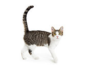 Young active cat with happy smiling expression walking over white background