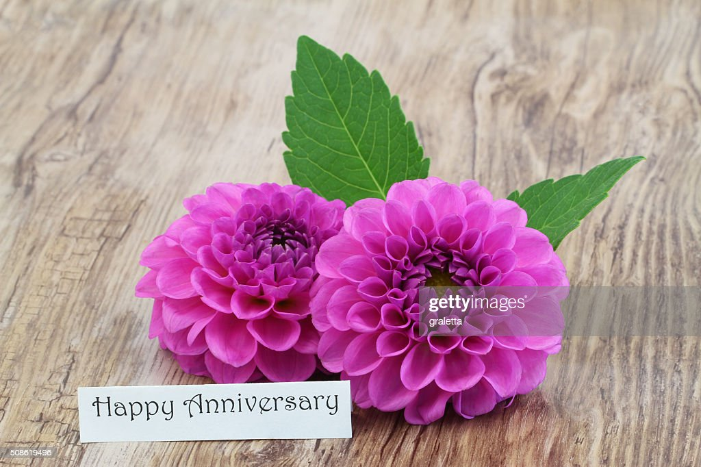 Happy Anniversary card with pink dahlia flowers : Stock Photo