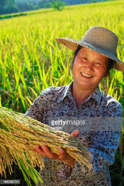 happy asian farmer holding rice in paddy