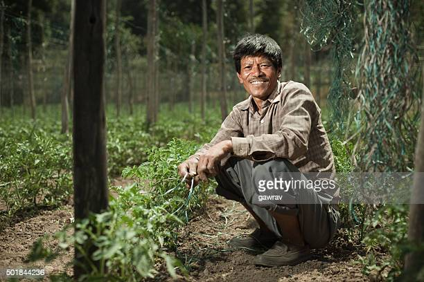 Happy Asian peasant man in tomato farm, looking at camera.