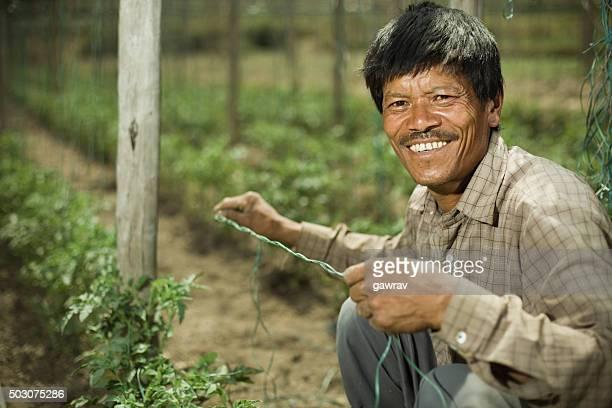 Happy Asian peasant man in tomato farm, looking at camera.