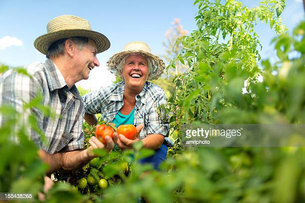 happy austrian retirees in tomato field