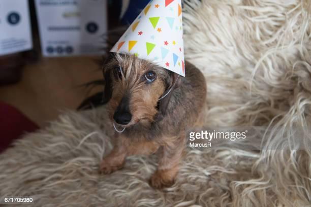 Happy birthday dachshund