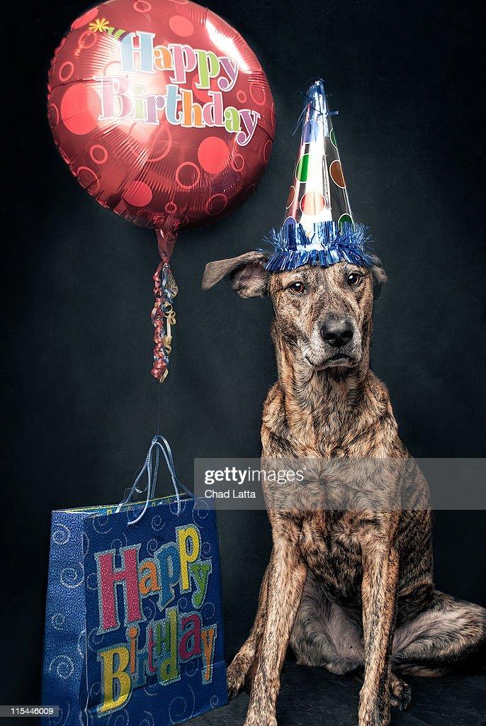 Happy birthday dog : Stock Photo