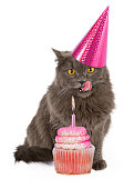 Funny photo of a cute cat wearing a pink birthday party hat with her tongue sticking out licking lips in anticipation of eating a cupcake.