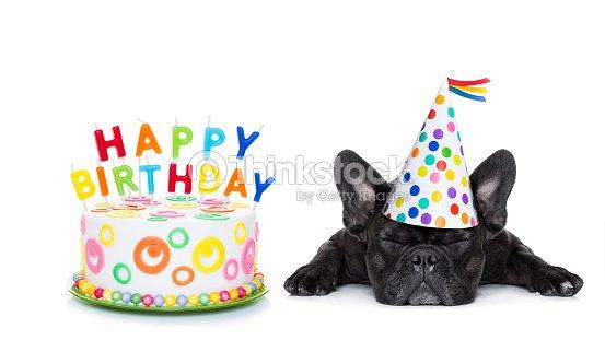 Happy Birthday Sleeping Dog Stock Photo Thinkstock