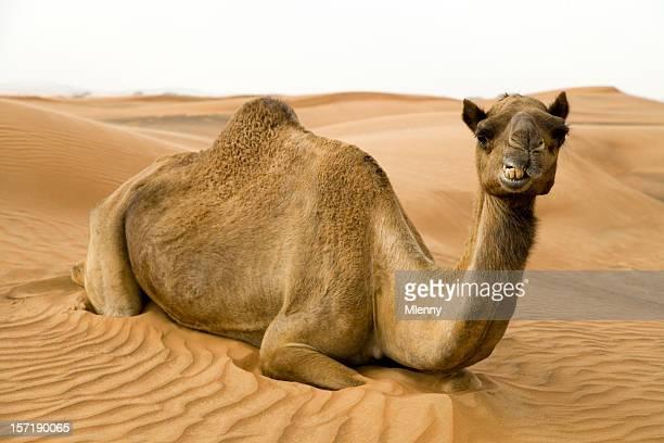 Feliz tirado por camello